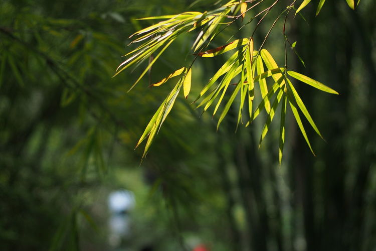 Darkness And Light In The Wild Bamboo Forest Bamboo Trees Shadows & Lights Bueaty In Nature
