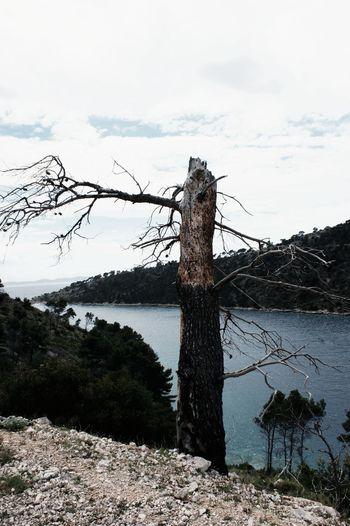Sky Sea Oldtree Pease Outdoors Sky Tree Day No People Nature Water Rural Scene Wooden Post