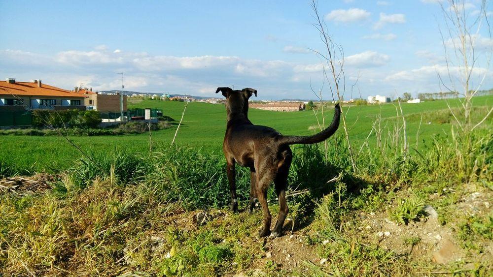 Dogs Dog❤ Burgos Dog Love Dog Life I Love My Dog