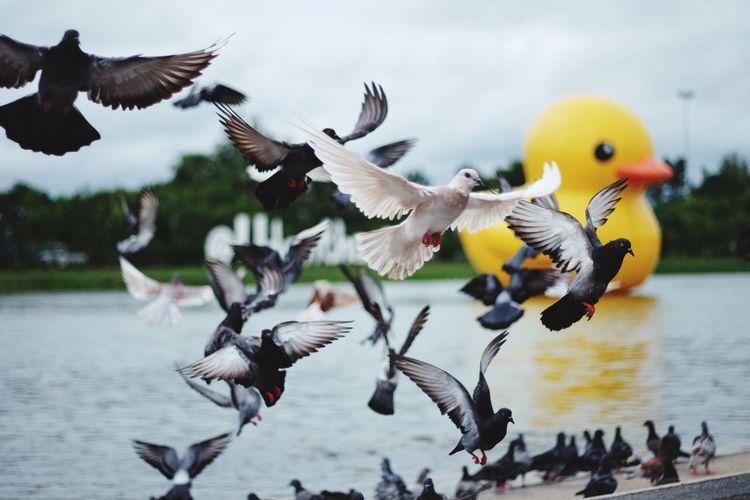 Flock of birds flying against lake