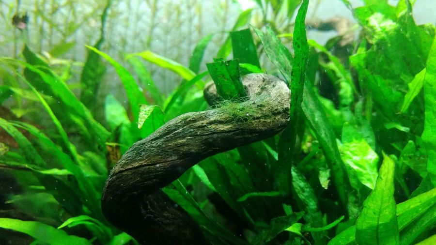 Green Color Reptile Animals In The Wild Animal Wildlife One Animal Animal Themes Plant Nature No People Leaf Outdoors Close-up Day Water UnderSea nofilternoeditNofilters Underwater Fishpond No Filter Green Color Green Nature Wood Fishpool 🐟🌳🍃