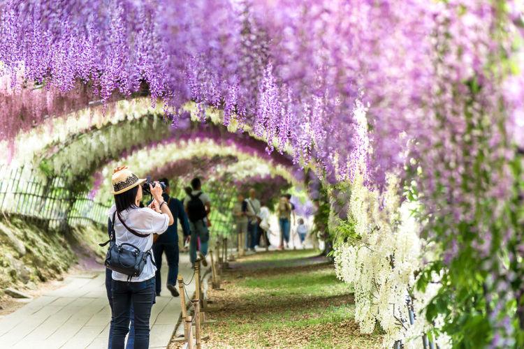People standing by purple flowering plants in park