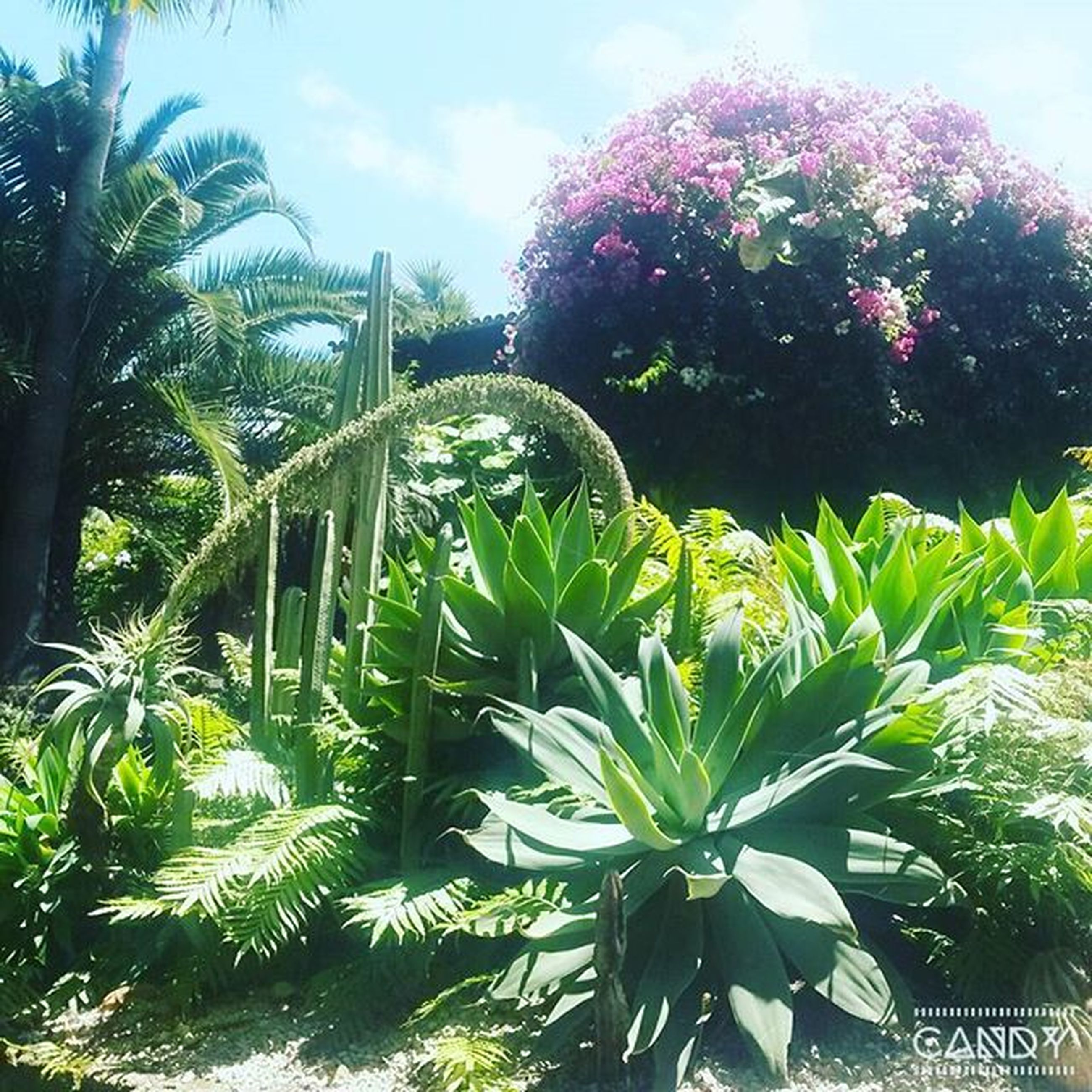 growth, tree, palm tree, low angle view, plant, sky, green color, leaf, nature, flower, park - man made space, beauty in nature, day, formal garden, outdoors, built structure, no people, cactus, sunlight, architecture