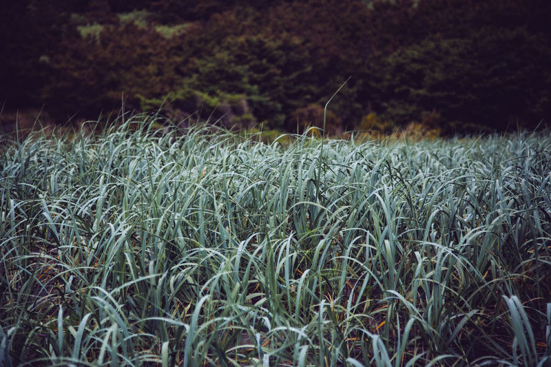 Beauty In Nature Close-up Day Field Grass Growth Landscape Nature No People Outdoors Plant Rural Scene Scenics Tranquil Scene Tranquility