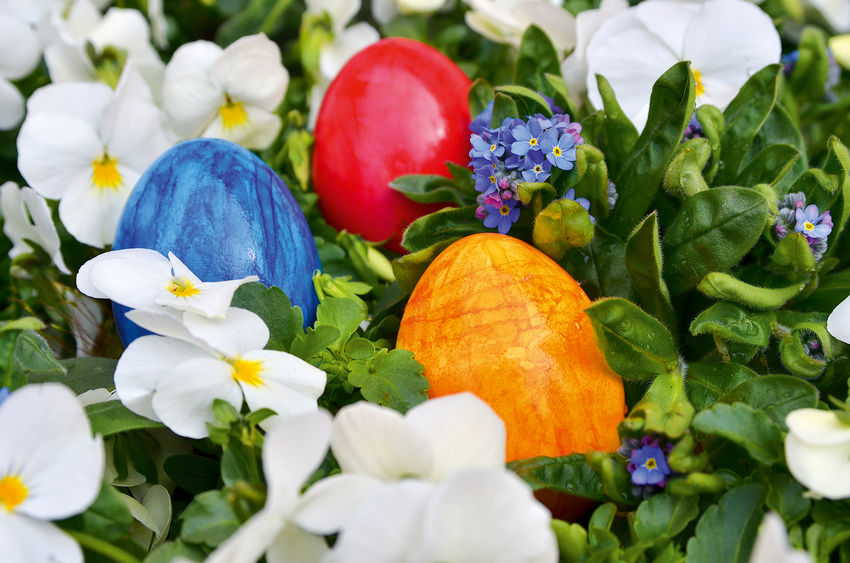 Bald ist Ostern… Close-up Colorfull Day Easter Easter Eggs Flower Flower Head Forget-me-not Freshness Growth Hand Colored No People Plant Springtime White Pansy