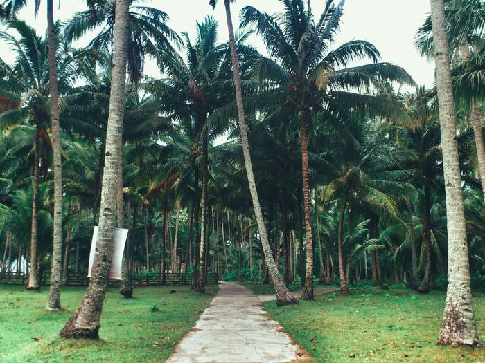 Rayuan pulau kelapa Travelling EyeEm Nature Lover Travel Photography My Best Photo 2015 Freelance Life Capturing Freedom Snapshots Of Life INDONESIA Escaping EyeEm Indonesia