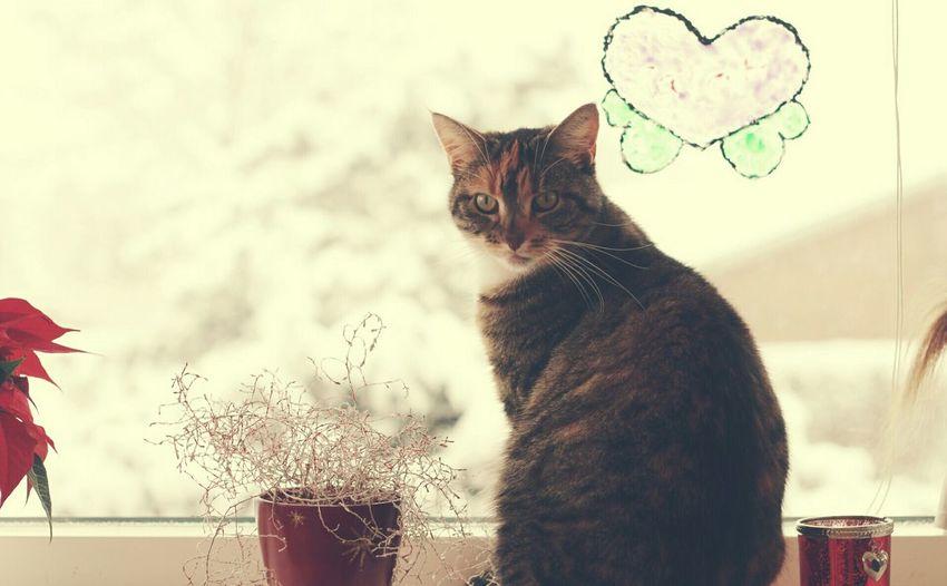 Portrait of cat relaxing on window sill