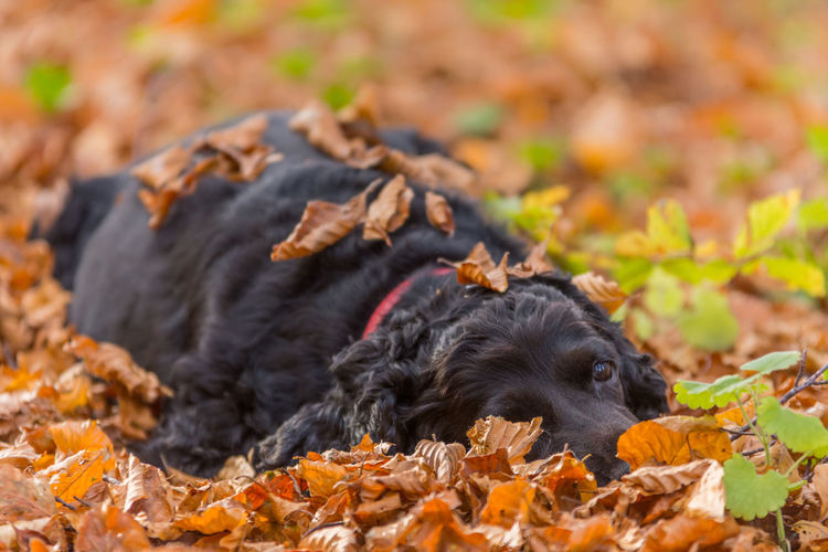 High angle view of a dog resting on leaves