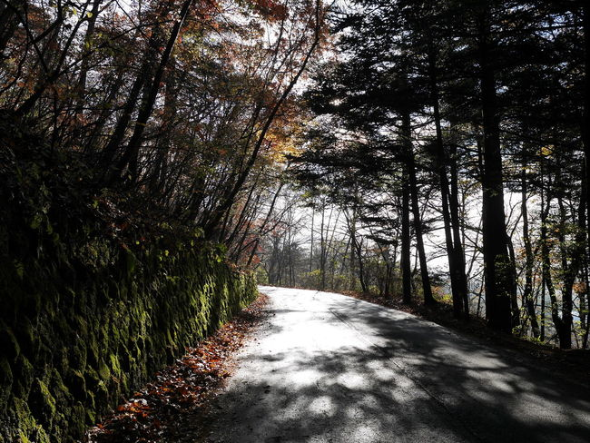 Beauty In Nature Forest Nature No People Outdoors Road The Way Forward Tranquil Scene Tree