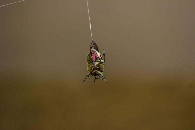 Close-Up Of Bug On Web
