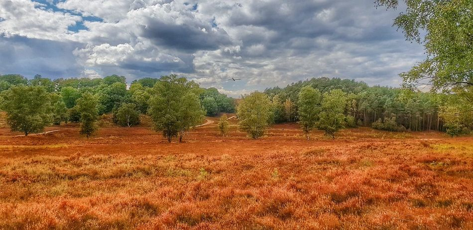 Fischbeker Heide Heide Park Natural Beauty Nature Photography Nature Lieblingsfoto Fischbek Fischbeker Heide First Eyeem Photo Fotografia Fotography Fotoshooting Best EyeEm Shot Eyemphotography Germany Hamburg Eyem Best Shots Tree Rural Scene Agriculture Field Sky Landscape Cloud - Sky