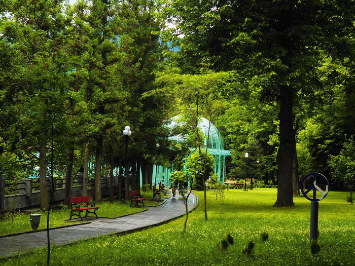 Beauty In Nature Borjomi Day Georgia Grass Green Green Color Growth Men Nature Outdoors Park - Man Made Space People Real People Tree