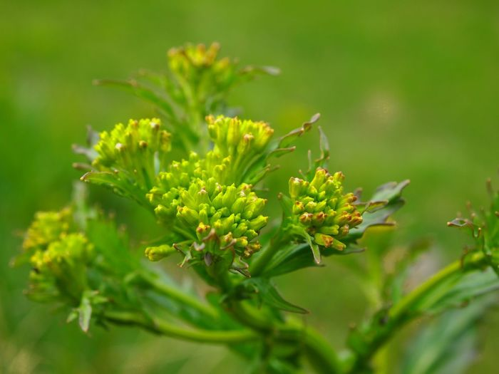 Beauty In Nature Close-up Day Flower Freshness Green Color Growth Nature Nature_collection Naturelovers New Life No People Outdoors Plant Selective Focus Spring