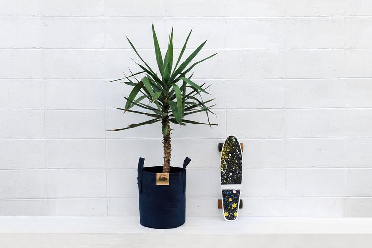 EyeEm Selects Wall - Building Feature Potted Plant Plant Growth No People Cactus Indoors  Day Architecture Skateboard Urbanstyle Yucca