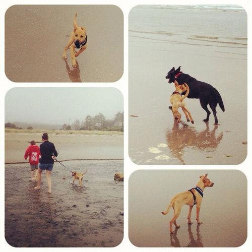 Tide Pool Walking