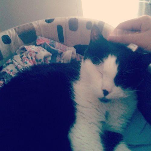 Y aquí está Billy al pie del cañón 16 años!! Cat Cats Catlover Billy Gatete Gato Menudodormilon