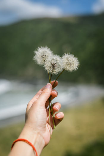 Close-up of hand holding dandelion against blurred background
