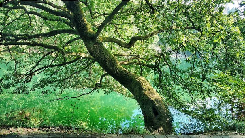 Bizkaia Barakaldo Errekatxo Euskalherria Plant Green Color Tree Growth No People Nature Day