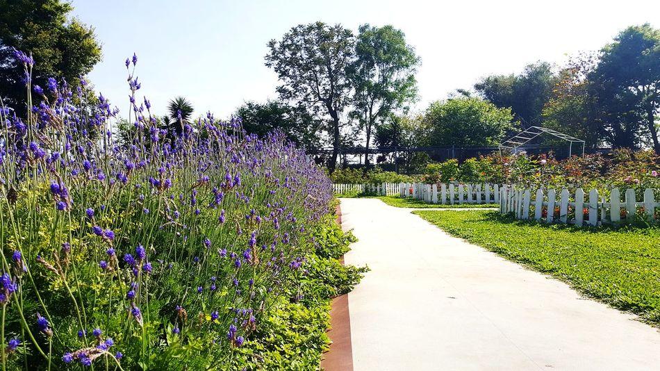 置中主義。 Lavender Garden Center Wesanderson Mixeggstudio