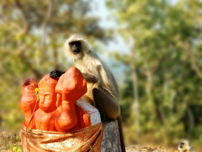 Hinduism Hindu