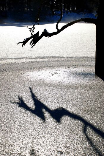 Ice Winter Shadow Animal Themes Beach Bird Day Focus On Shadow Frozen Water Nature One Person Outdoors People Real People Sand Shadow Silhouette Sunlight