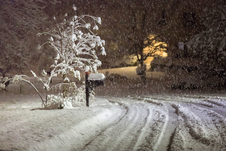 Shades Of Winter Night Lights Beauty In Nature Cold Temperature Mailbox Nature Night No People Outdoors Road Snow Snowing Tree Weather Winter