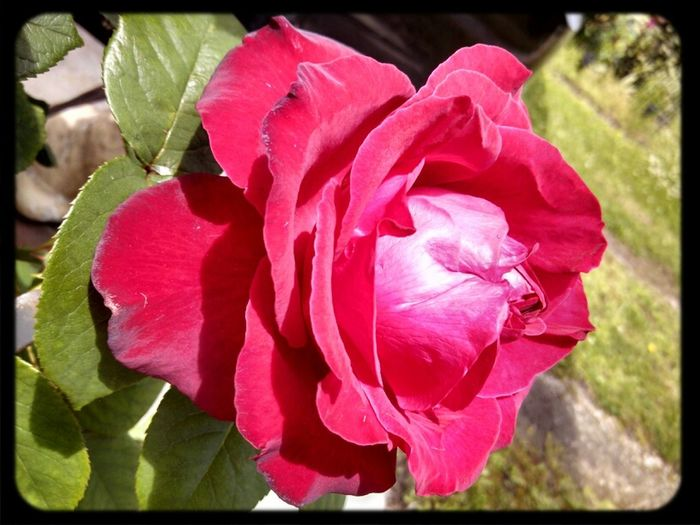 North Carolina Awesome Sky  G's Red Roses