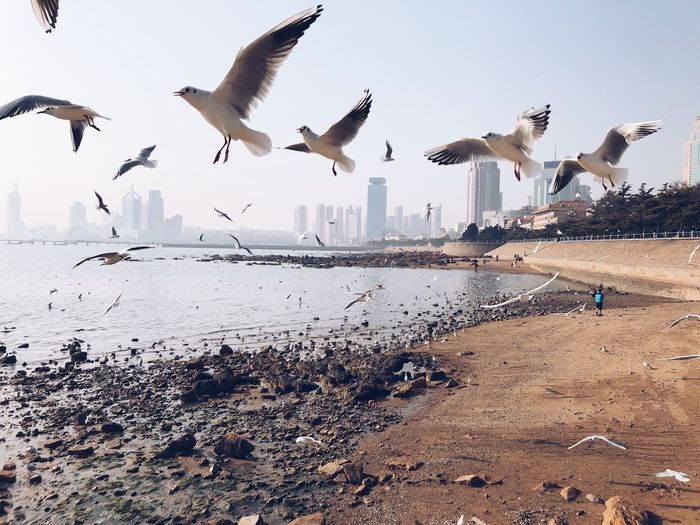 Bird Animals In The Wild Group Of Animals Animal Wildlife Flying Spread Wings Water Animal Nature Beach Motion Sea Seagull Large Group Of Animals Animal Themes Day Coastline City Cityscape Hometown China Life Sky Sunshine Sand Analogue Sound