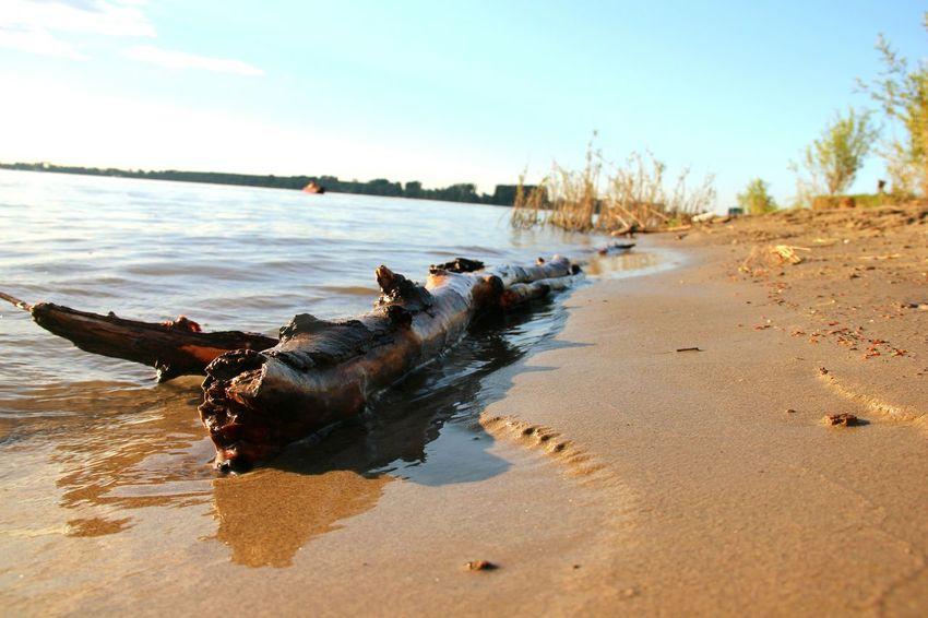 River Sand Wood Zemun Lido Nature Hidden Gems  Water Beach 43 Golden Moments