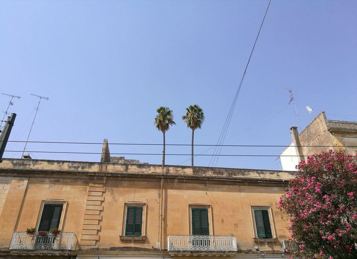 Architecture Low Angle View Huawei P9 Plus City View  Lecce City Palm Tree Prospective