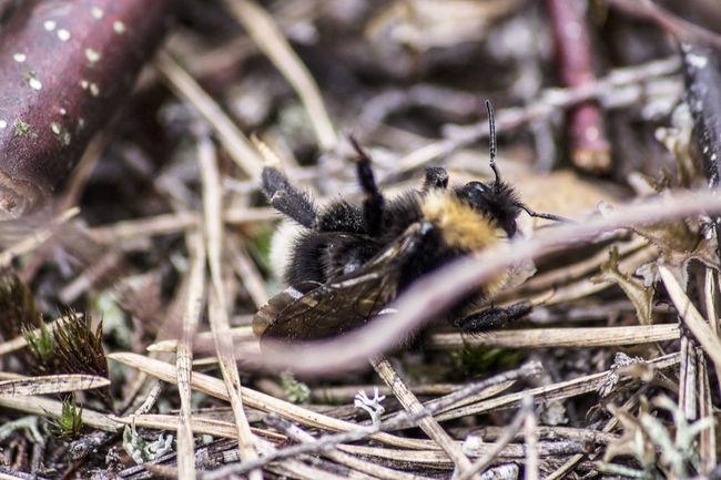 En pääse ylös t.🐝 ©️JaniVauhkonen Animals In The Wild One Animal Insect Animal Themes Animal Wildlife Day Outdoors No People Nature Close-up Canon EOS 600D JaniVauhkonen The Week On EyeEm