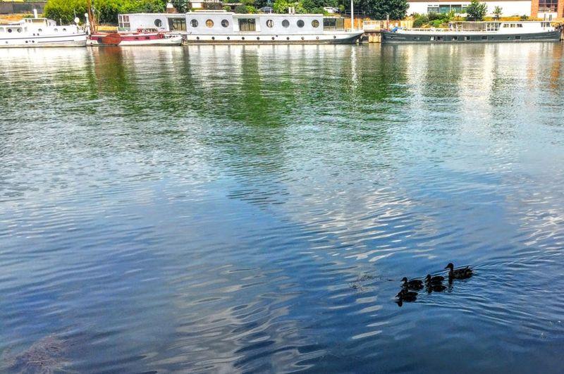 Balade Bateaux Canards Détente Jour La Seine Riviere
