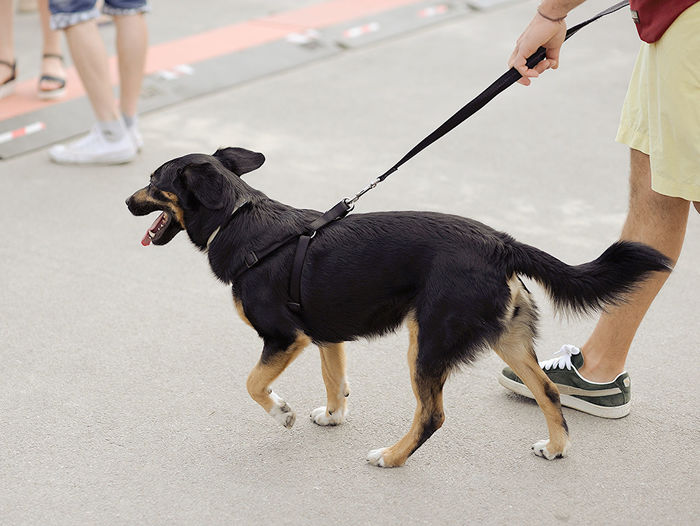 Low section of man walking with dog on street