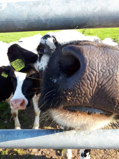 Water Animal Themes Close-up Livestock Animal Body Part