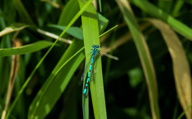 Insect Damselfly Animals In The Wild Animal Wildlife Close-up Nature