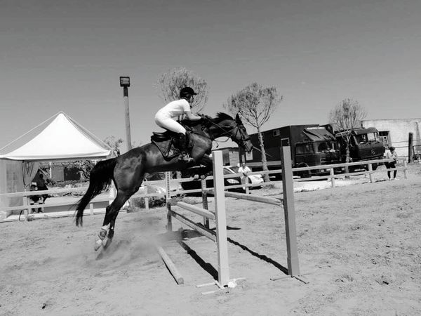 Agility One Person People Day Young Adult Animal Themes Outdoors Horse Photography  Horse Riding Horse Life Horsejumping Life Obstaclerun Obstacles Into Opportunities Animals Animal Portrait Italy🇮🇹 Welcome To Black Welcome To Black EyeEmNewHere The Portraitist - 2017 EyeEm Awards Live For The Story Place Of Heart