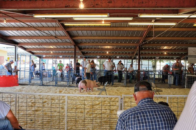 2016 Jefferson county Fair Fairbury Nebraska A Day In The Life Camera Work Countyfair Cultures Fair Farm Life Farmers Large Group Of People Lifestyles Nebraska Photography Rural America Shooting Photos