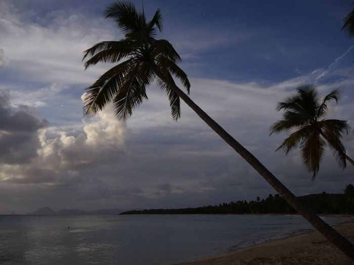 Travel Destinations Martinique Sainte Anne Les Salines Beach Palm Tree Tree Cloud - Sky Sky Beauty In Nature Nature Water Tranquil Scene Tranquility Sea Scenics No People Outdoors Horizon Over Water Day Palm Frond Sunset