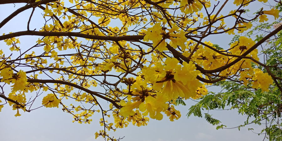 Tree Flower Branch Yellow Flower Head Leaf Springtime Sky Close-up