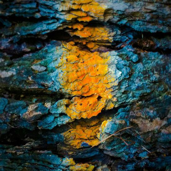 Nature Minimal Minimalism Macro Geometric Shapes Geometry Colors OpenEdit Hello World Photo