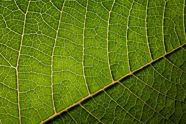 Veins Macro Photography Veins In Leaves Backgrounds Beauty In Nature Close Up Close-up Freshness Full Frame Green Color Growth Leaf Nature No People Outdoors Veins