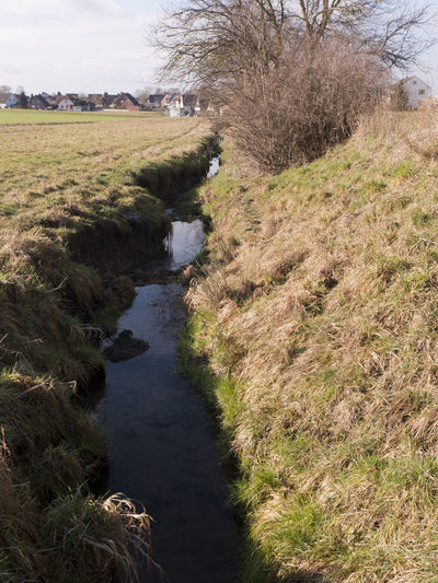 A ditch drains the adjacent meadows and fields. Plant Grass Nature Environment Day Tree Tranquility Land Scenics - Nature Landscape Field Beauty In Nature Non-urban Scene Stream - Flowing Water Ditch Adjacent Dehydrated Rural Scene Agricultural Field Meadow Farm Countryside Embankment Water Canal