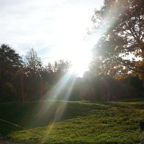 Sun shining through trees on grassy field