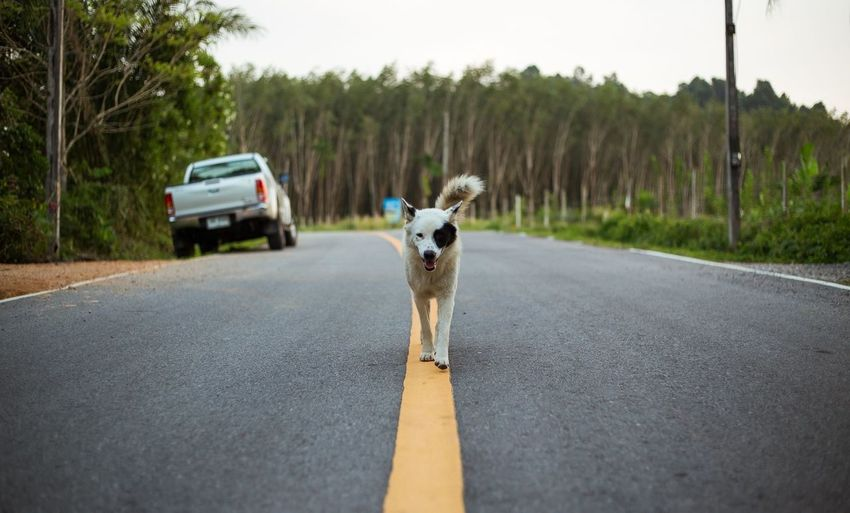 Portrait of dog walking on road against trees