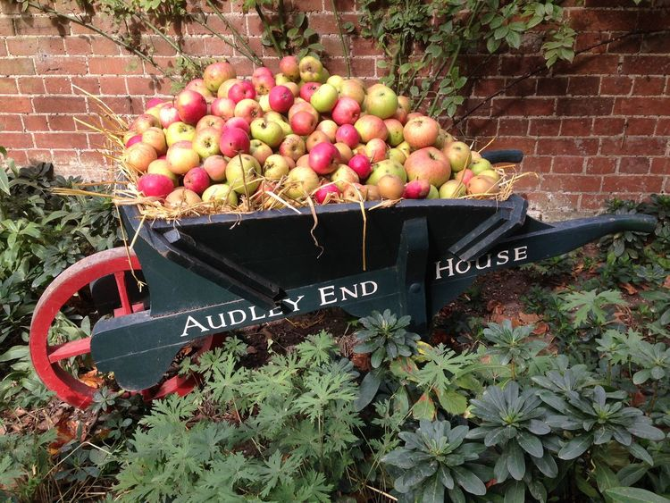 Apples Audley End Day Food Food And Drink Freshness Fruit Growth Healthy Eating No People Outdoors Text Wheelbarrow