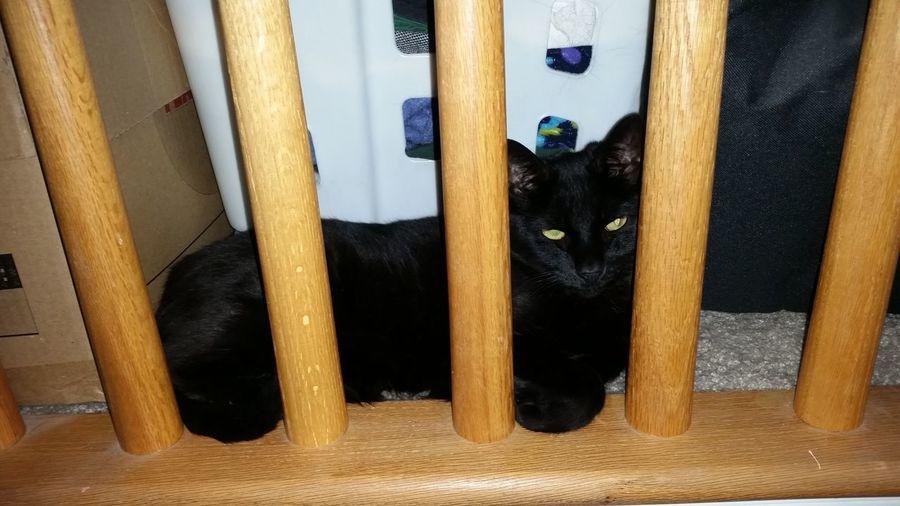 Black cat sitting on sofa at home