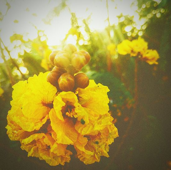 Flower Yellow Nature Plant Growth Fragility Beauty In Nature Outdoors Petal Day No People Freshness Flower Head Close-up EyeEmNewHere