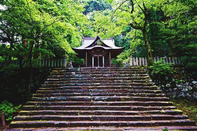Heisenji -国史跡白山平泉寺旧境内- Fukui Japan Shinto Shrine Fujifilm X-E2 XF14mmF2.8R Grounds Of A Shrine Green 静寂 日本