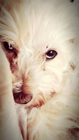 EyeEm Selects Pets Portrait Domestic Cat Dog Looking At Camera Close-up