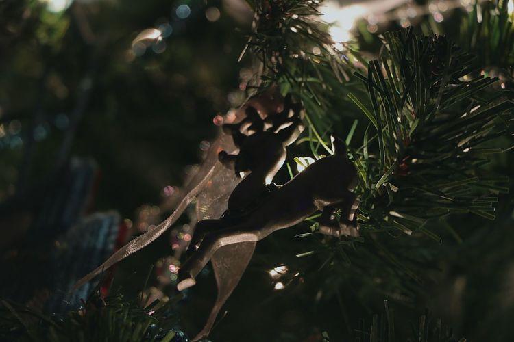 Best Christmas Lights Christmas Ornament ❄⛄ Christmas Tree Atmospheric Mood Tree Taking Photos Enjoying Life Tranquility Ornaments Christmas Ornaments Ambience Taking Photos Christmas Lights Ornament Reindeer